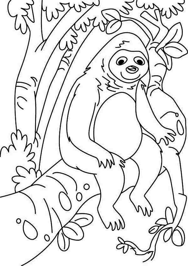 lazy animal sloth coloring page  color luna