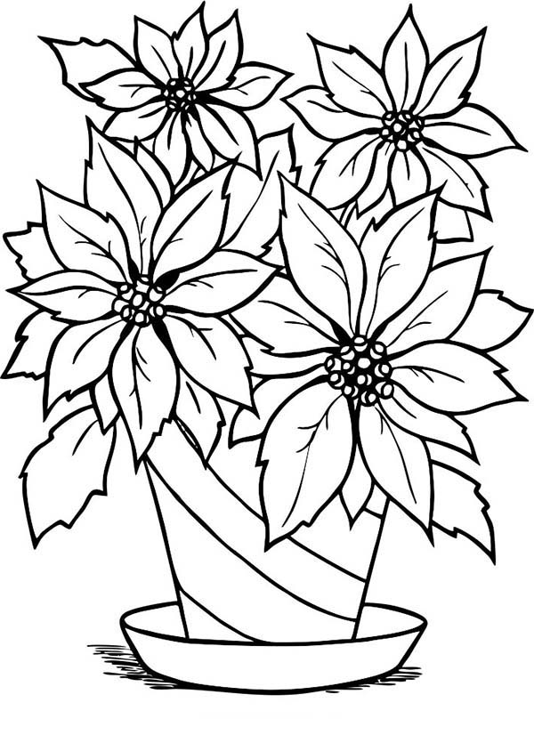 poinsettia in flowerpot coloring page color luna