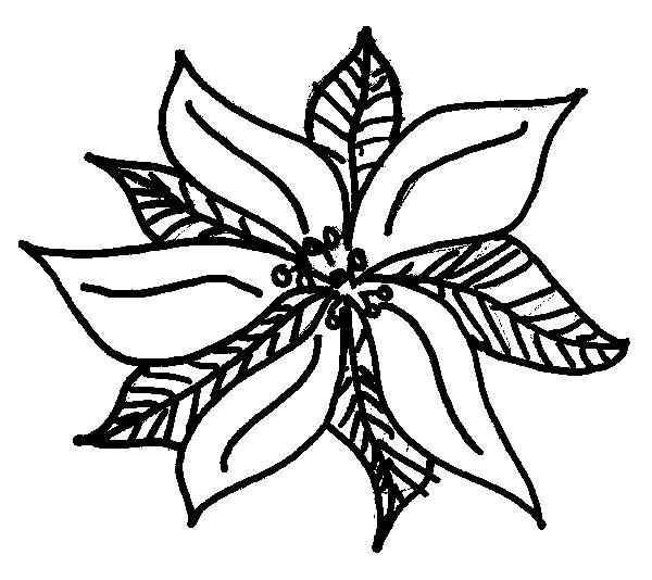 how to draw poinsettia coloring page color luna