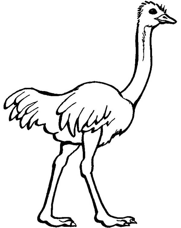 ostrich ostrich image coloring page
