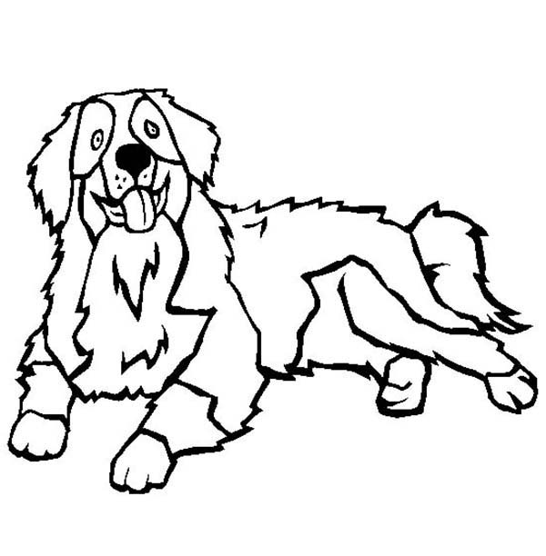 bernese mountain dog coloring pages images amp pictures findpik