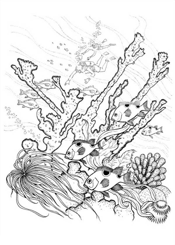 coral reef of nature coloring page color luna