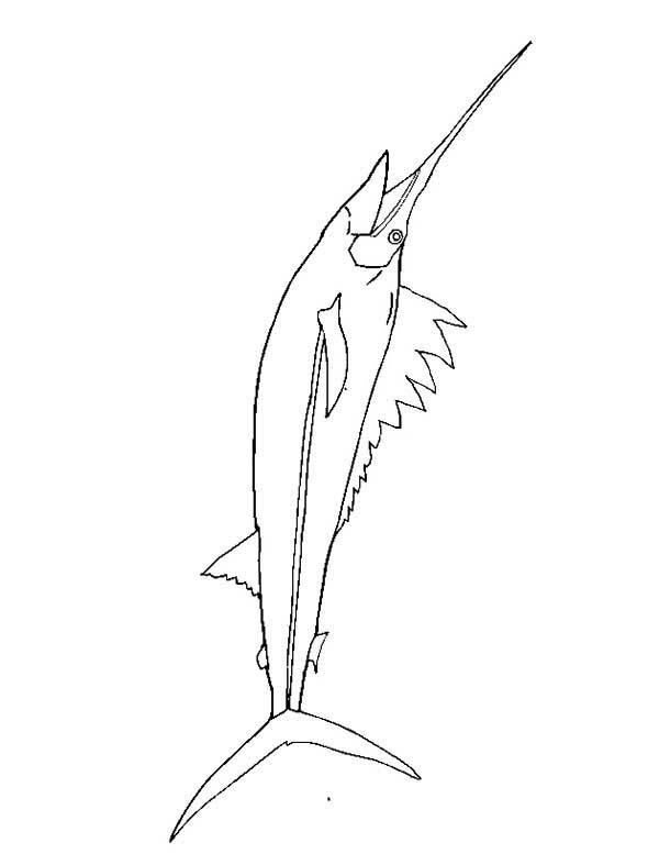 swordfish dangerous fish swordfish coloring page