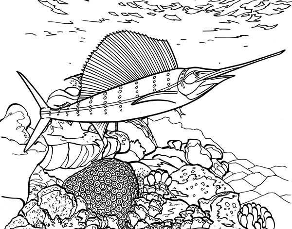 swordfish between coral reef coloring page color luna