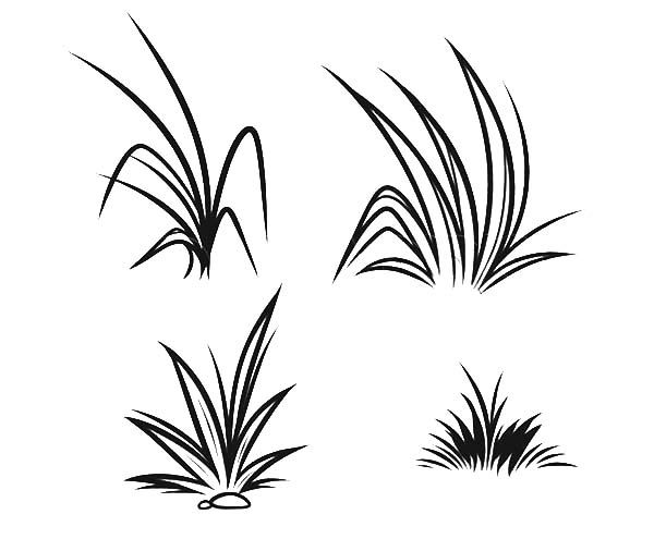 tall grass coloring page tigers in tall grass coloring pages