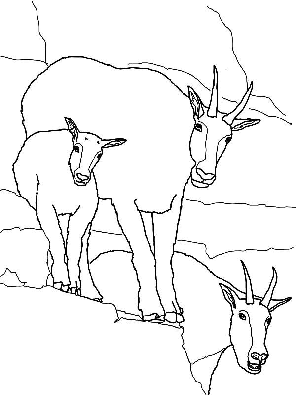 Boer Goat Coloring Pages Coloring Pages