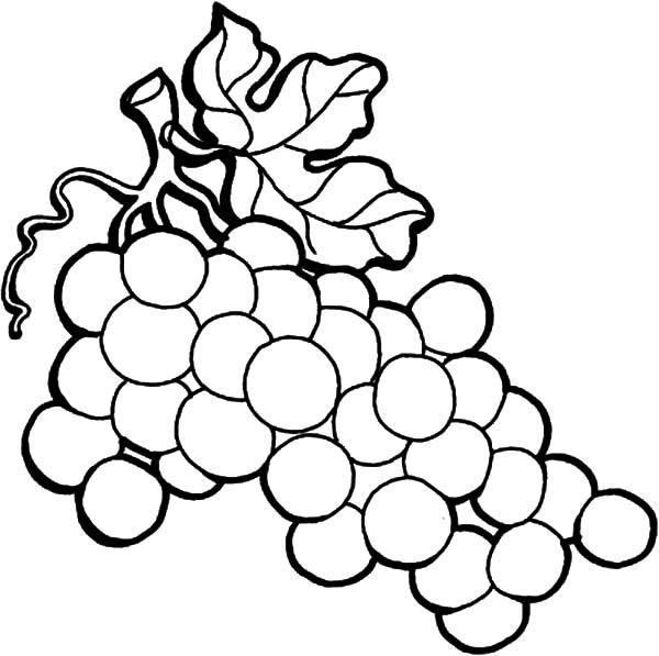 grape vine coloring page autumn harvest thanksgiving coloring