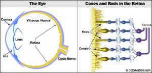 Look Inside the Eye