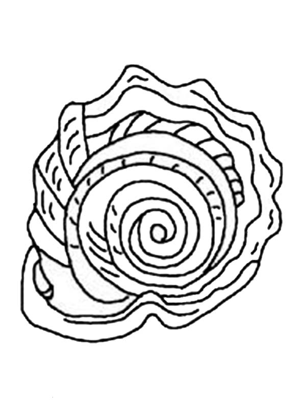 a gorgeous spiny jewel box seashell coloring page download