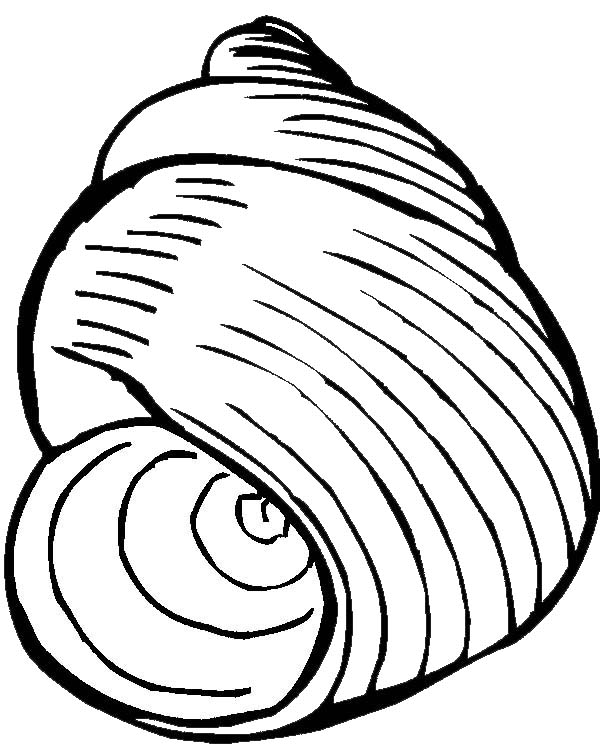 an exquisite moon snail seashell coloring page download amp print