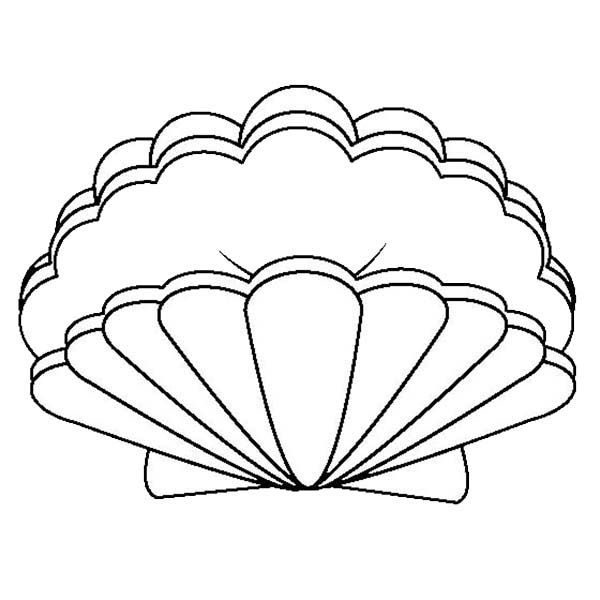 an open lions paw seashell coloring page download amp print online