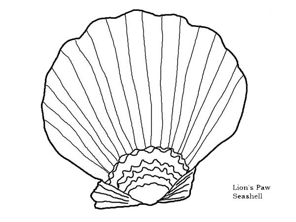 beautiful lions paw seashell coloring page download amp print