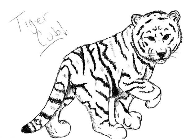 a nice sketch of white tiger cub coloring page download amp print