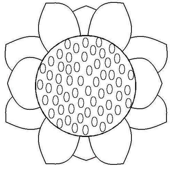 sunflower close up sunflower coloring page