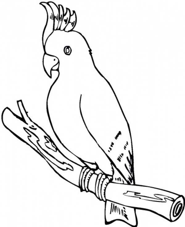 parrot cockatoo parrot coloring page