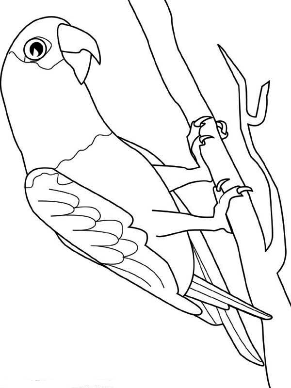 parrot picture coloring page download amp print online coloring