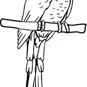 parrot pirate parrot coloring page pirate parrot coloring page