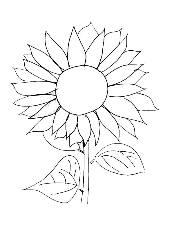 sunflower picture coloring page sunflower picture coloring page