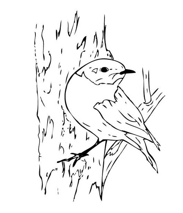 blue bird coloring page download amp print online coloring pages