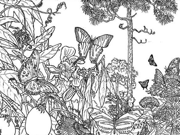 Erfly Rainforest Insect Coloring Page
