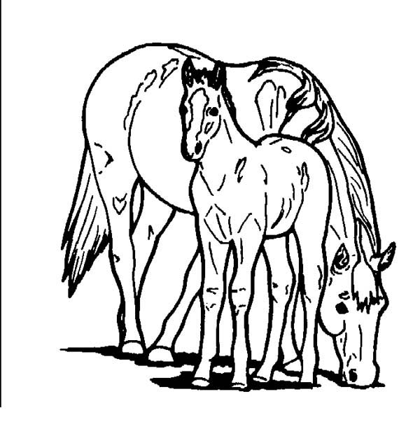 horse eating with baby horse in horses coloring page download