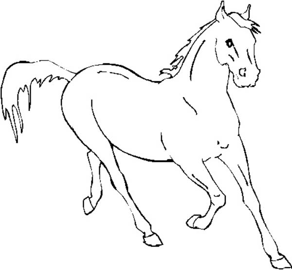 Budweiser Clydesdale Horses Coloring Pages - Coloring Pages For ... | 555x600
