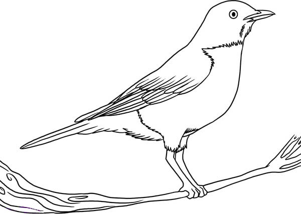 to draw robin bird coloring page download amp print online coloring