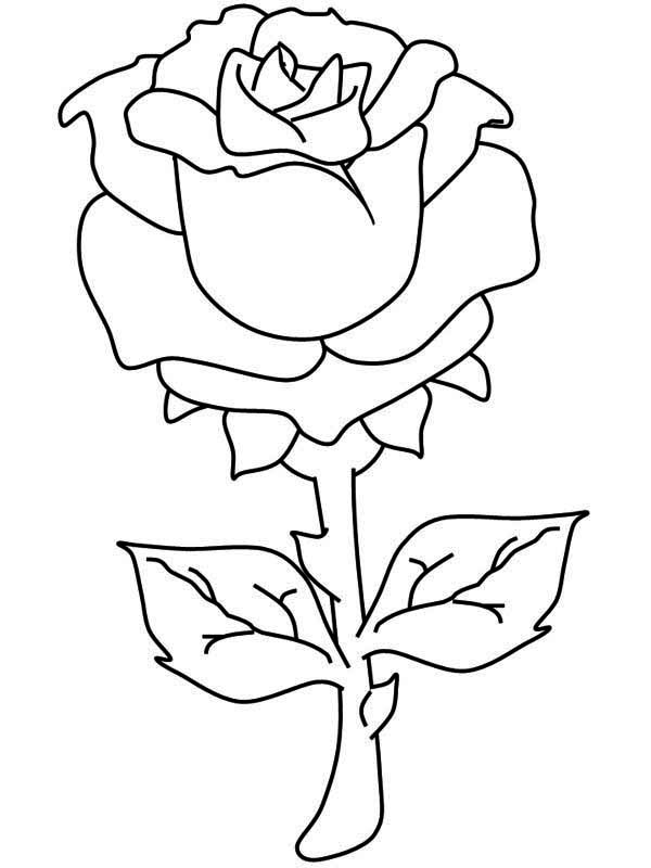 one beautiful rose coloring page download amp print online