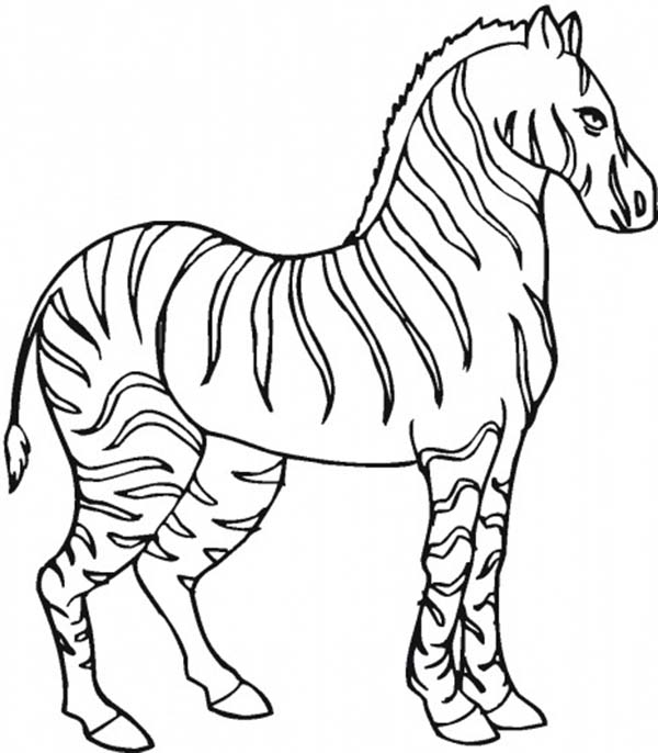 stallion zebra coloring page download amp print online coloring