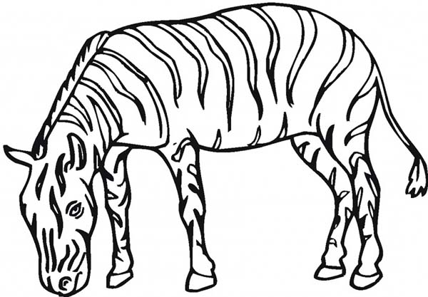 the plains zebra coloring page download amp print online coloring