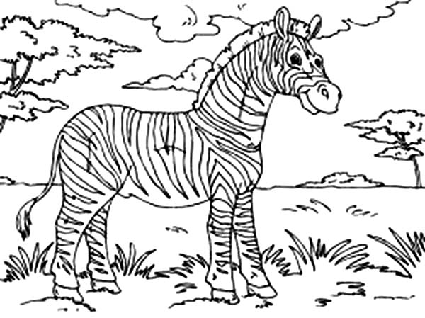 zebra at the meadow coloring page download amp print online
