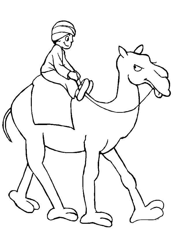 camel face coloring page pics photos camel how to draw a camel