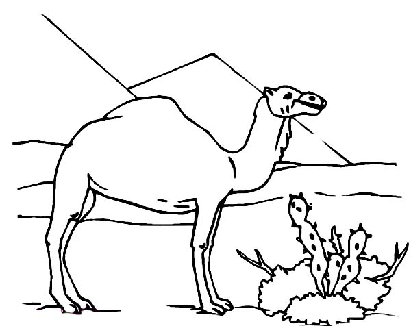 camel and cactus coloring page download amp print online coloring