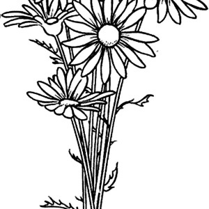 Daisy Flower Coloring Page For Kids Daisy Flower Coloring