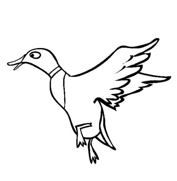 duckling learn to fly coloring page download amp print online