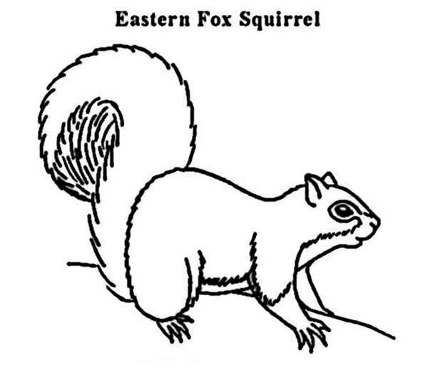 eastern fox squirrel coloring page download amp print online