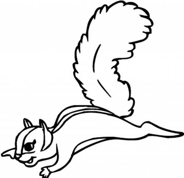 flying squirrel coloring page download amp print online coloring