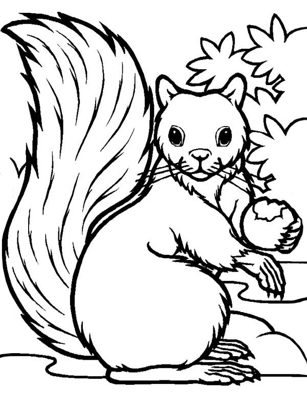 hungry squirrel eating coloring page download amp print online