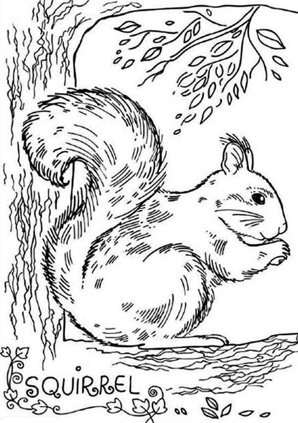 realistic picture of squirrel coloring page download amp print