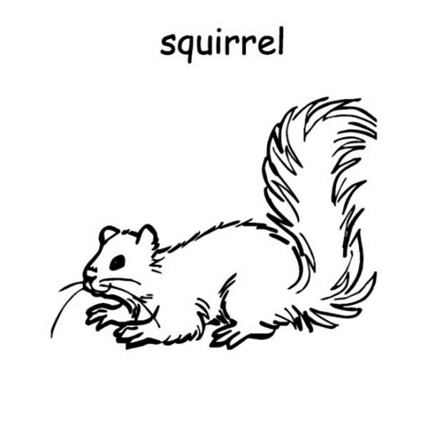 s is for squirrel coloring page download amp print online coloring