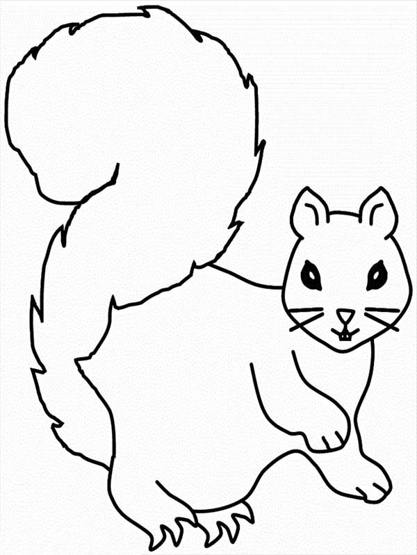 squirrel coloring page for kids squirrel coloring page for kids