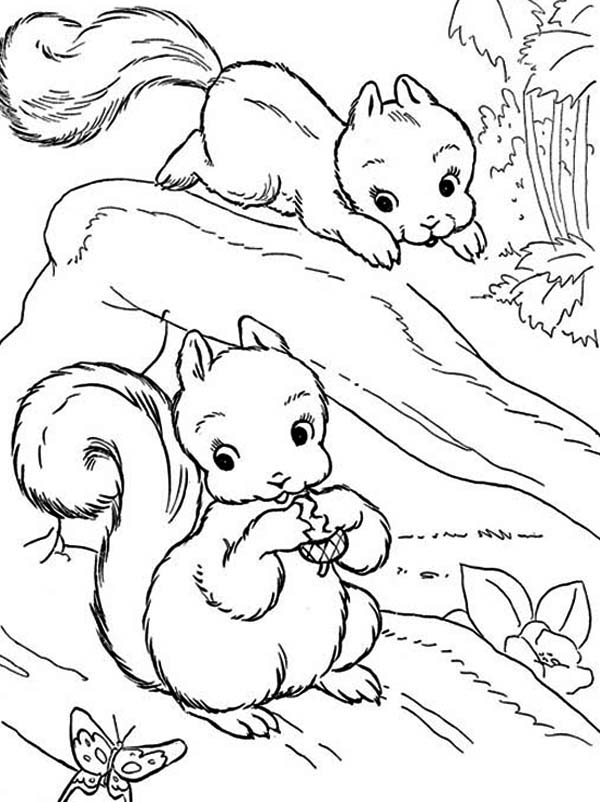 two baby squirrel coloring page download amp print online coloring