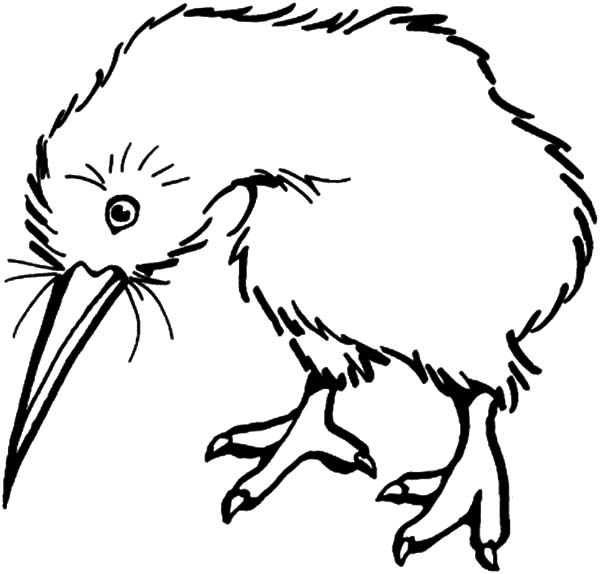 kiwi bird cannot fly coloring pages download amp print online
