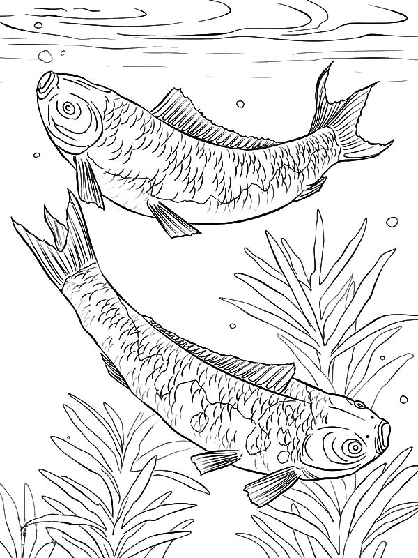 airplane coloring pages 24 download amp print online coloring