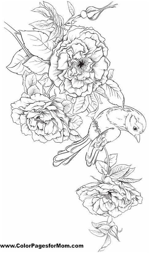 birds 28 coloring page