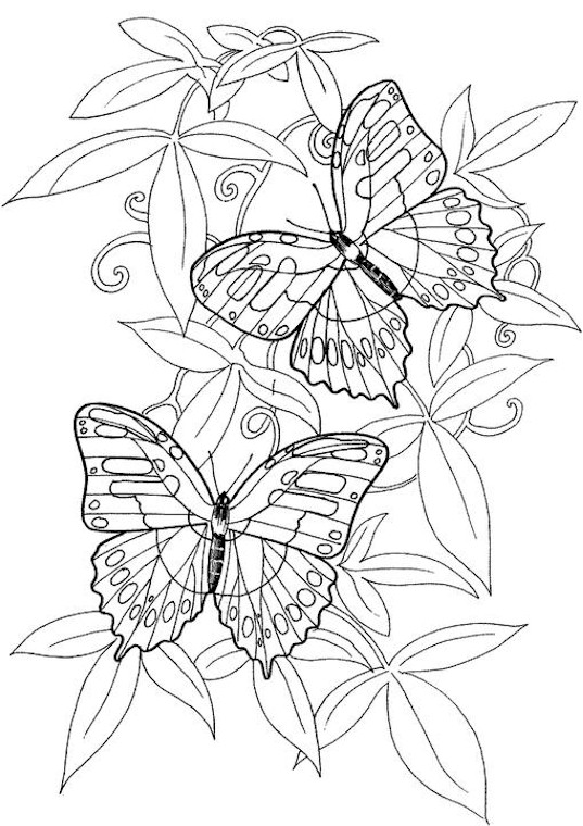 butterfly 5 page