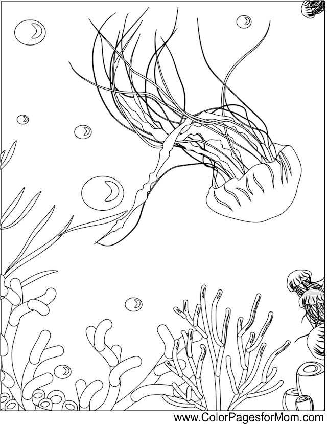 box jelly fish coloring page free box jelly fish online coloring