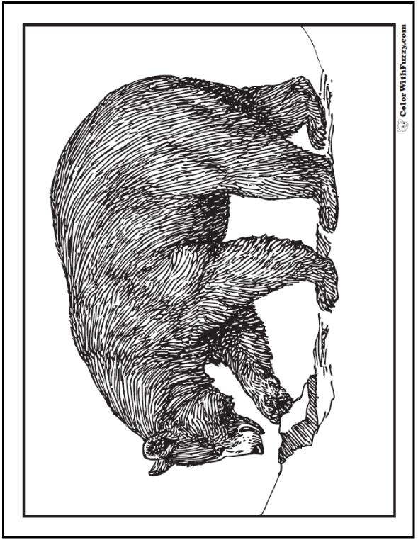 bear coloring pages grizzlies koalas pandas polar and teddy