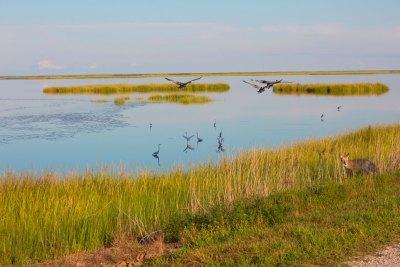 Bombay Hook Wildlife Refuge, Kent County, Delaware