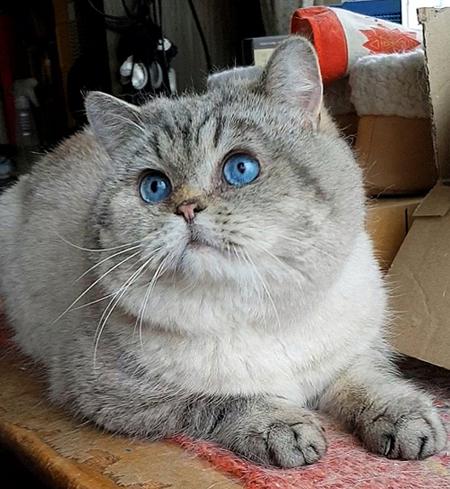 Katten är singelns bästa vän heter ordspråket.
